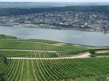 Rhine Valley in the Spring