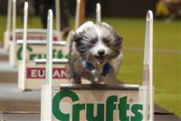 Crufts at the NEC, Birmingham