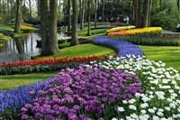 The Dutch Bulbfields