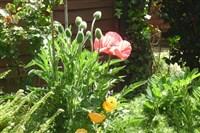Shrewsbury Flower Show