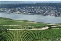 Rhine Valley in Spring