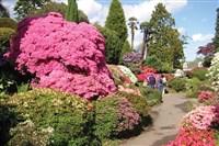 Wisley Gardens Flower Show